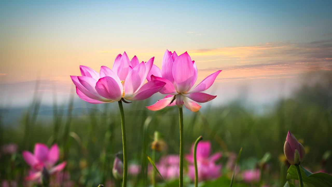 Top 10 Pink Flowers for Your Garden